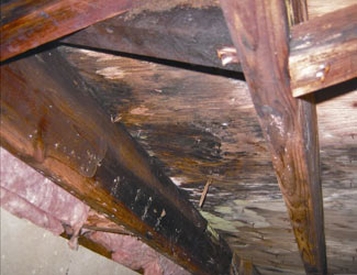 mold and rot in a Owensboro crawl space