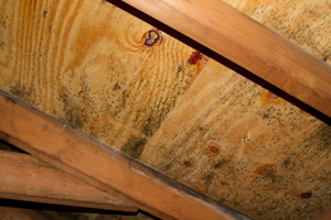 Mold growing on roof sheathing in Newburgh attic