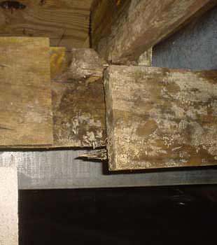 Extensive Basement Rot Found In Henderson By Healthy Spaces ...